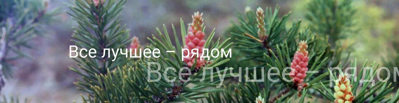 mecthbin-pecypc